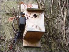 bird box with camera