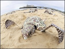 Sea turtle on Bournemouth Beach