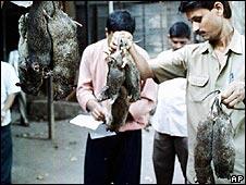 Rats in Mumbai
