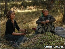 Kyrgyzstan fruit harvest