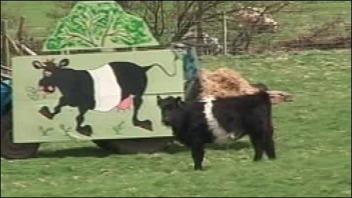 Cow standing next to tractor disguised as a cow