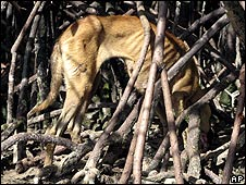 A dog eats the remains of another dog on the Malaysian island of Pulau Selat Kering (Malaysian SPCA handout)