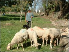 Henrique and his sheep