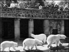 Polar bears at Chester Zoo(Pic supplied by Chester Zoo)