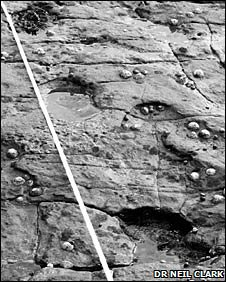 A track way showing footprints