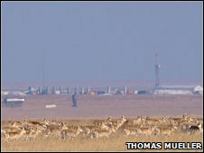 Gazelle herd in front of oil field (Copyright: Thomas Mueller)