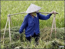 Rice farmer in Vietnam