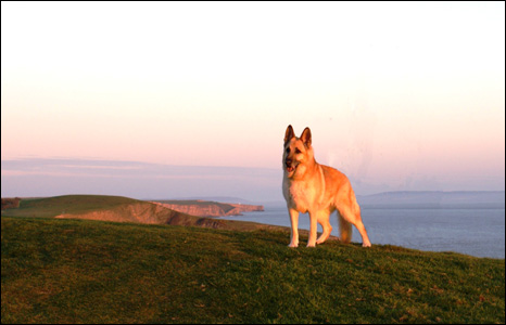 John Duncan sent us this picture of his dog Meg while on an evening walk between Southerndown and Ogmore-by-Sea.