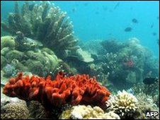 Corals in Honda Bay in Palawan island, western Philippines
