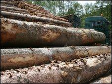 Logs unloaded