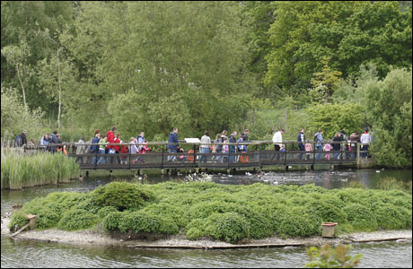 People crossing a bridge at Pensthorpe (photo: Claire Borley)