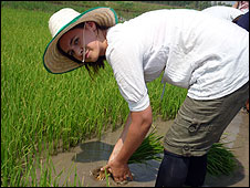 Stacey in a rice field
