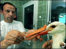 Tamas Kothay and stork