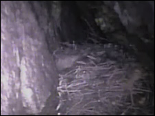 Image of the nest in the cave