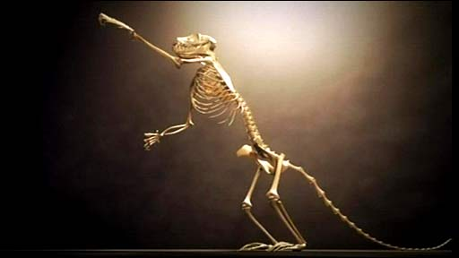Primate fossil in 3D