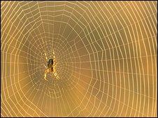 Garden spider's web
