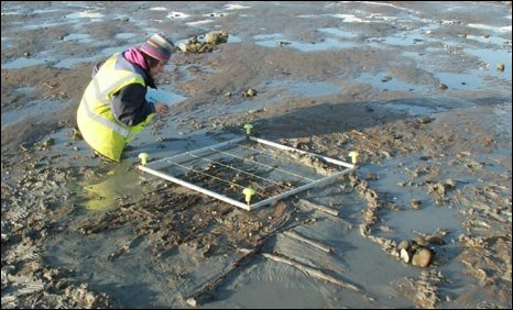 An  archaeologist recording the remains of the trackway