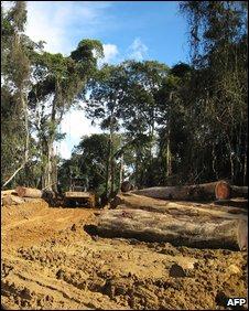 Logging, Cameroon