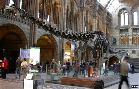 Diplodocus skeleton (NHM)