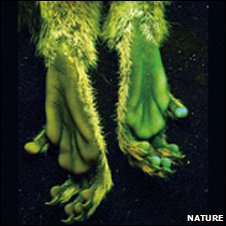 Glowing marmoset feet (Nature)