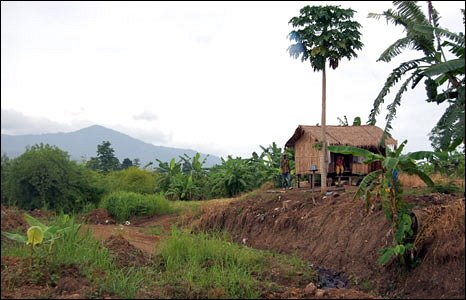Landscape of Pailin province, showing thatched hut and palm tree.