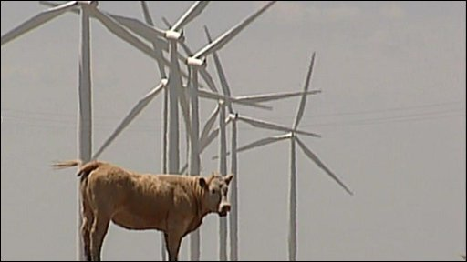 a cow near the windfarm