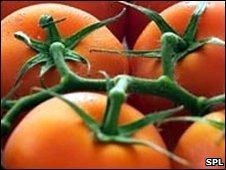 Tomato pill 'beats heart disease'