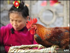 Chicken in market, China, awaiting slaughter, Jan 09