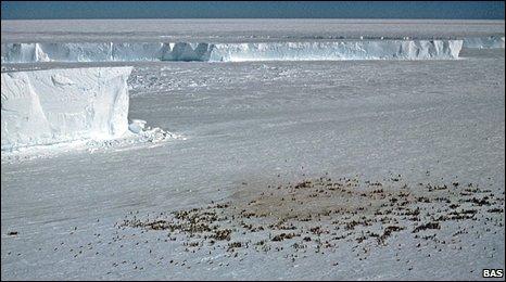 Emperor penguin colony (BAS)