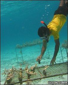 Mohamed Nasheed planting coral (U Kloiber)