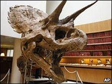 Triceratops skeleton (2008)
