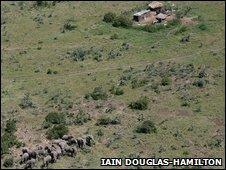 Bull elephant herd in Ex-Erok, Kenya