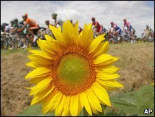 Tour de France (file image)
