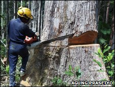 Logger in Kalimantan
