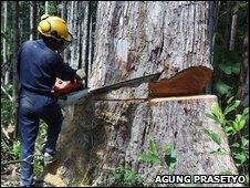 Logger in Kalimantan