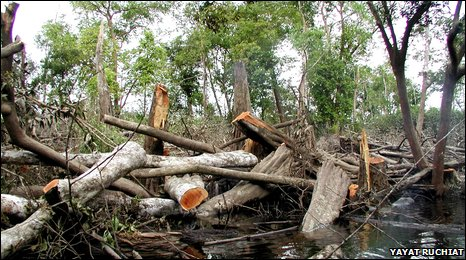 Rainforest destruction in Indonesia