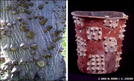 Incense pot depicting the spines of the Cerbia tree (Ceiba pentandra)