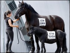 Protester Scarlett Gowan demonstrates with horses Teddy and Little Jack outside the SECC in Glasgow