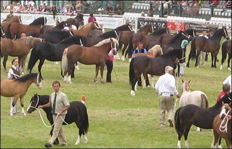 Horses at last year's Royal Welsh Show