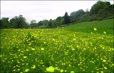 Andrew Williams from Barry,Vale of Glamorgan took this photo of buttercups and oaks at St Fagans