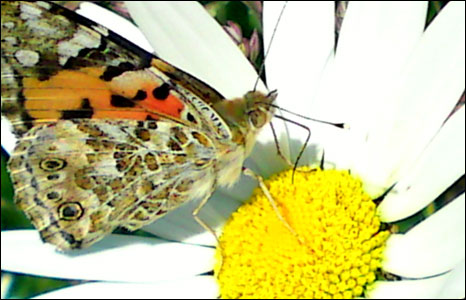 Martin Ross from Bangor took this butterfly close-up on his mobile in the grounds of Penrhyn Castle