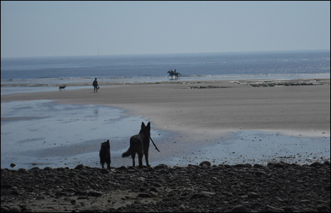 Marion Banks-Wilkinson took this shot of her dogs watching a summery scene at Sker Beach, near Kenfig.