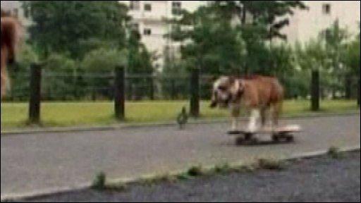 A dog on a skateboard