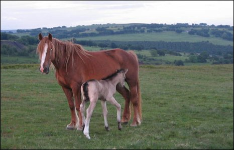 One day old foal