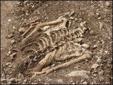 A torso found in the burial pit