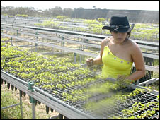 Watering seedlings