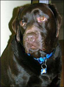 Wesley the dog