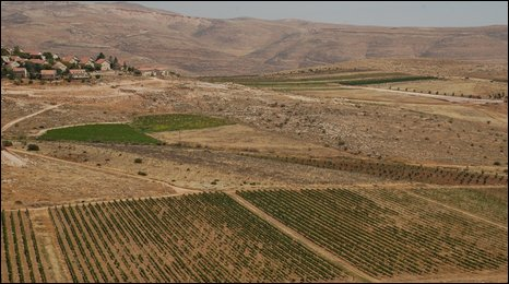 Vineyards by Kokhav Hashachar settlement