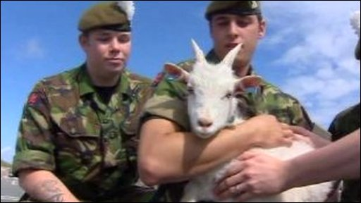 Royal Welsh regiment soldiers hold their new goat mascot, Billy