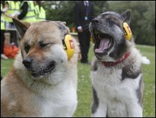 Dogs barking in world record attempt